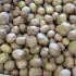 Giant Potato2015 Bins