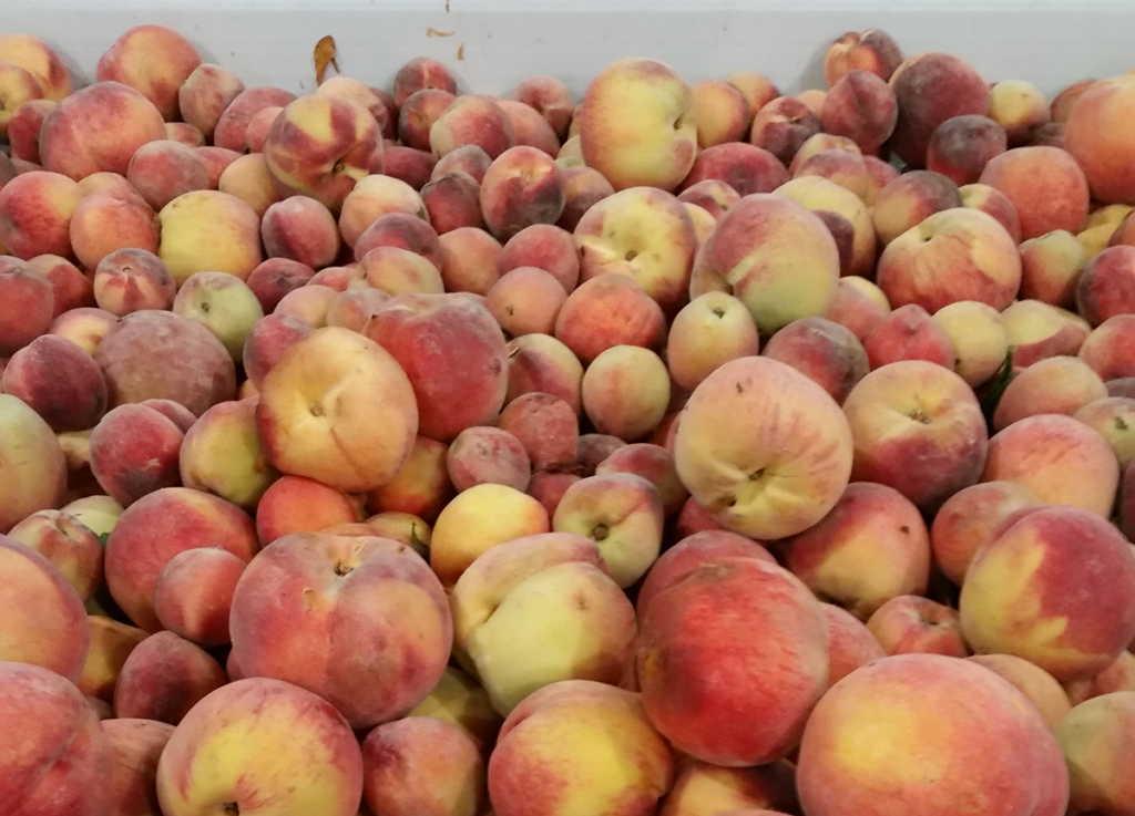 peaches-1024x737