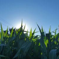 harvest-report