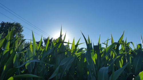 harvest report